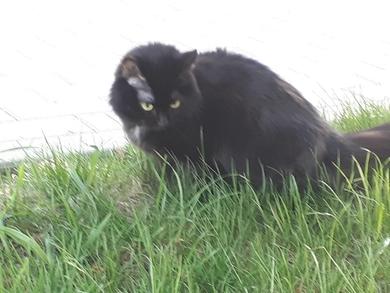 Замечена черная кошка