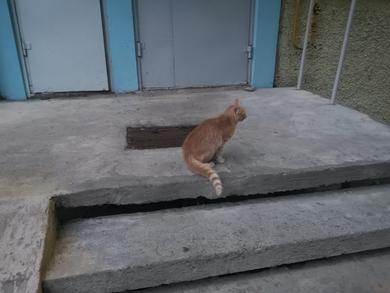 Найден молодой рыжий кот