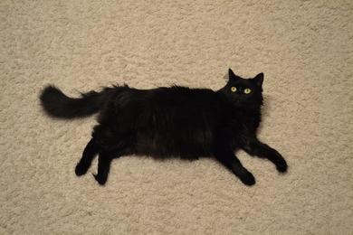 Пропала кошка Муся. , фото 2