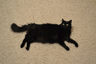 Пропала кошка Муся. , фото 3
