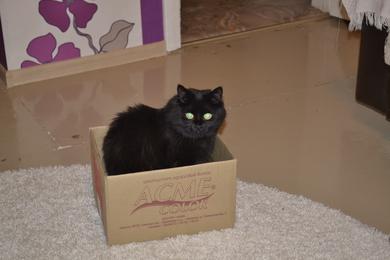 Пропала кошка Муся. , фото 4