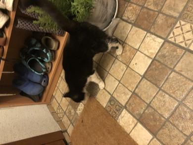 Нашёлся черно белый кот, фото 4
