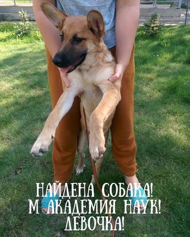 Найдена собака Академия наук метро