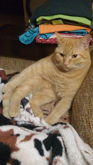 Потерялся кот. Серебрянка, фото 2