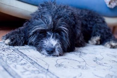 Найден пес 6 января , фото 2