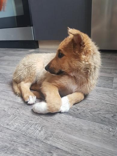 Найден щенок, фото 2