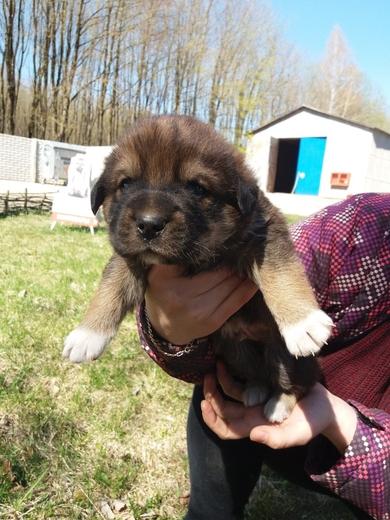 Срочно нужна передержка или дом щенкам, фото 3