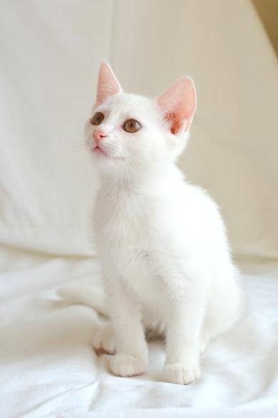 Белый котенок ищет дом!, фото 2