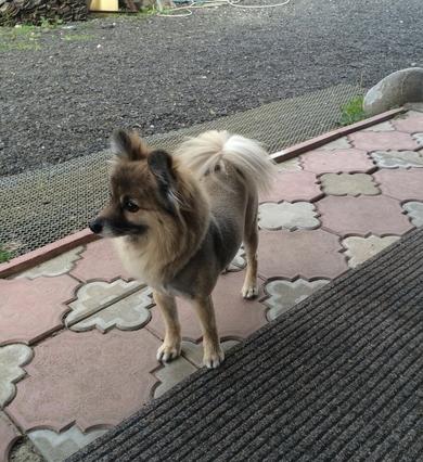 Пропала собака!!!