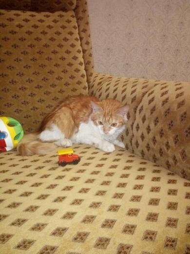 В ответственные руки котёнок, фото 3