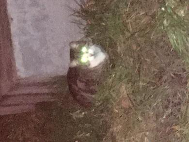 Молодой кот на Козлова