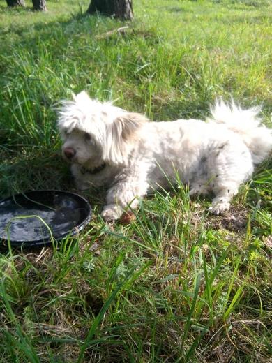 Найдена маленькая собачка, фото 2