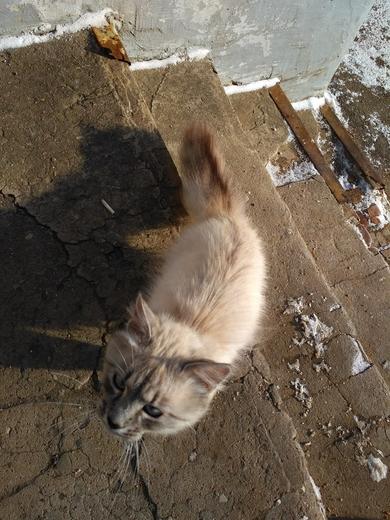 Найден кот. Минск!, фото 4