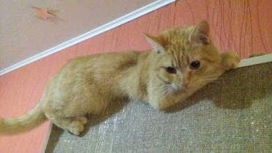 Потерялся кот. Серебрянка