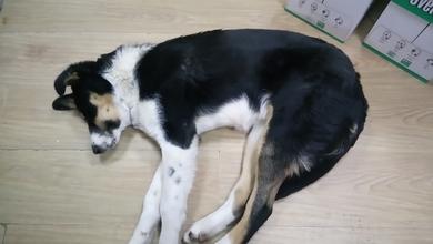СРОЧНО!!! Нашлась собака, в районе ледового  дворца и молочного комбината в Молодечно. Видно что чья то. Просьба помочь в распространении информации. Ищем хозяина!!!!!!!! 8-029-3233883, 8-029-3301133
