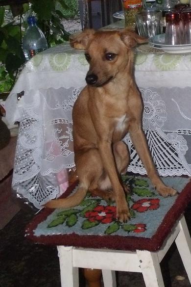 Пропала собака, фото 2