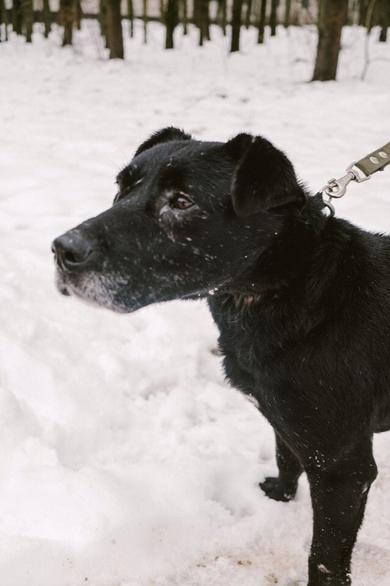 SOS. САМЫЙ прекрасный, САМЫЙ красивый пес ждет ЛУЧШЕГО ХОЗЯИНА!, фото 2