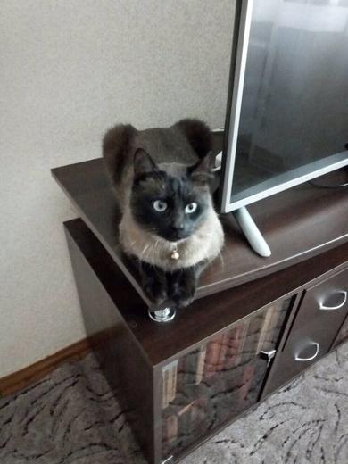 14.05 потерялся кот