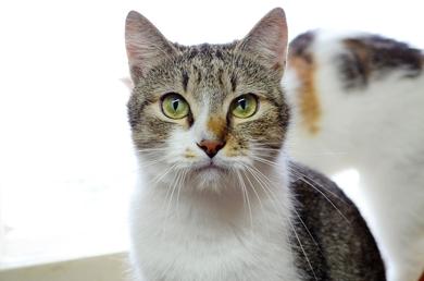 Кот Джентельмен в дар!, фото 3