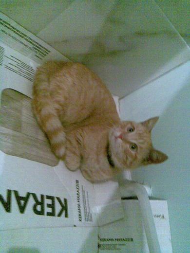 Найден рыжий котенок, фото 2
