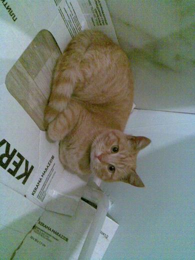 Найден рыжий котенок, фото 3