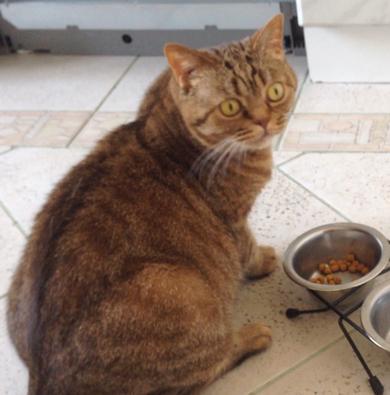 пропала кошка, фото 3