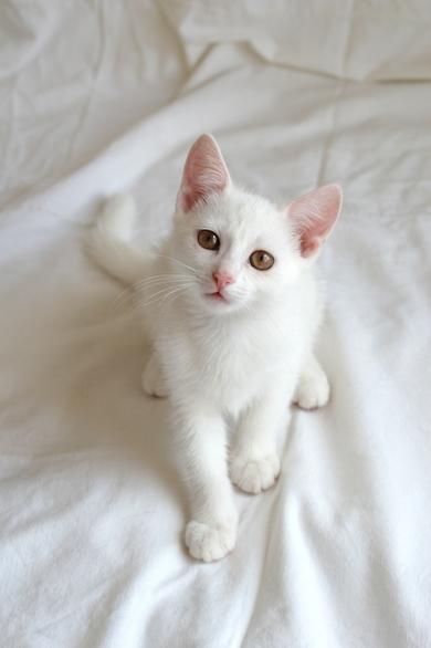 Белый котенок ищет дом!