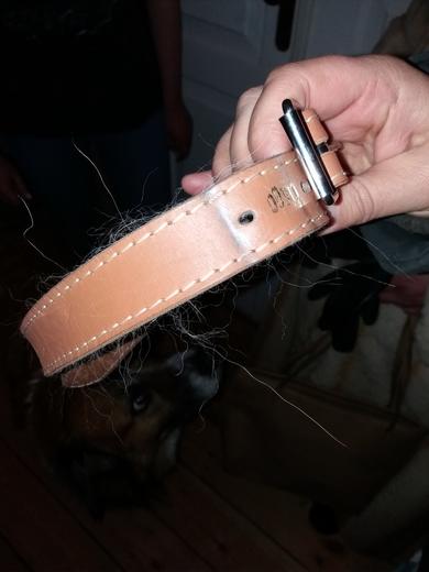 Собака ищет хозяина СРОЧНО, фото 3