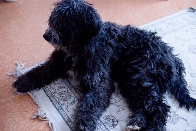 Найден пес 6 января , фото 3
