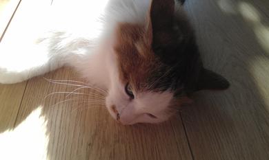 Потерян кот, фото 2