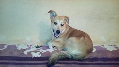 Найдена собака, мальчик, в Сухарево , фото 2