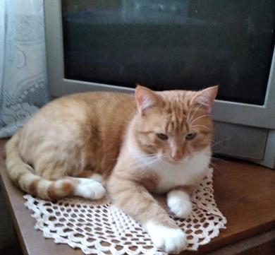 Кот по кличке Томас в дар