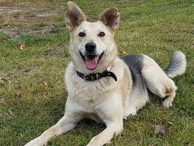 Обаятельная собачка в добрые руки!, фото 2