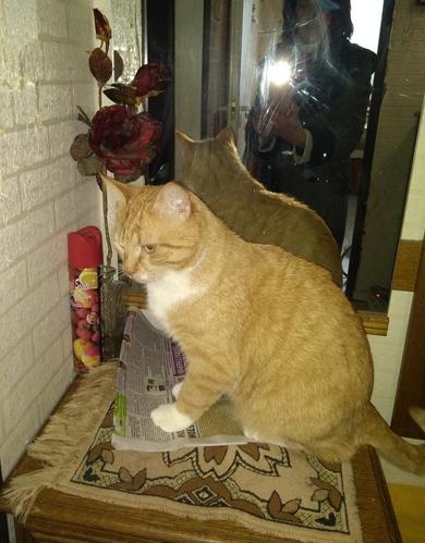Кот по кличке Томас в дар, фото 2