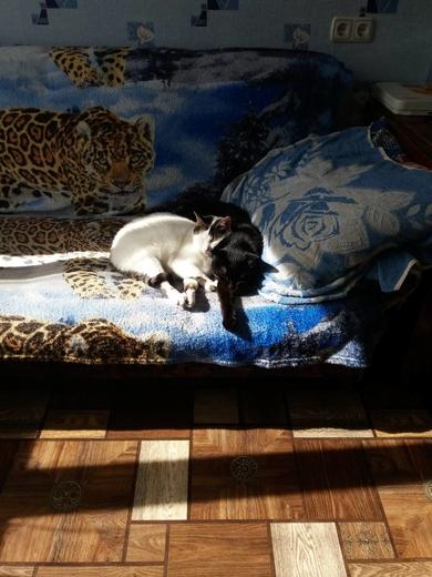 Потерялась кошка, фото 3