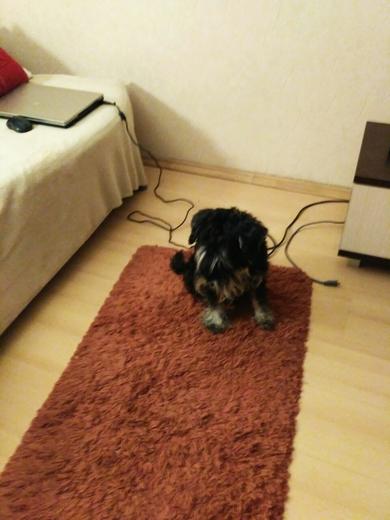 Нашли собаку , фото 2