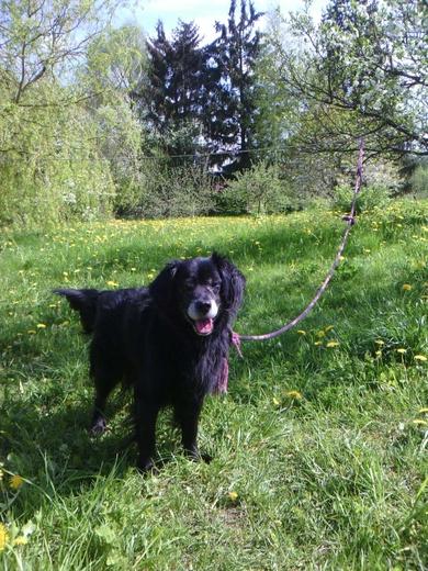 Пропал пёс возле оз.Большие Швакшты, фото 2