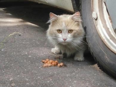 Замечен домашний кот/кошка