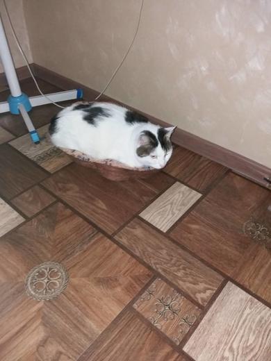Потерялась кошка, фото 4