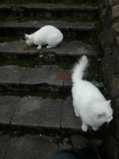 Замечены белые кот/кошка, фото 3