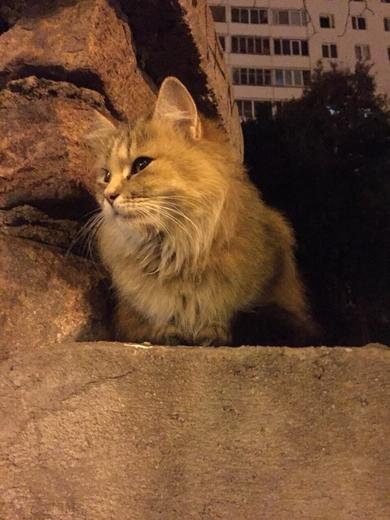 Замечена красивая и ласковая кошка