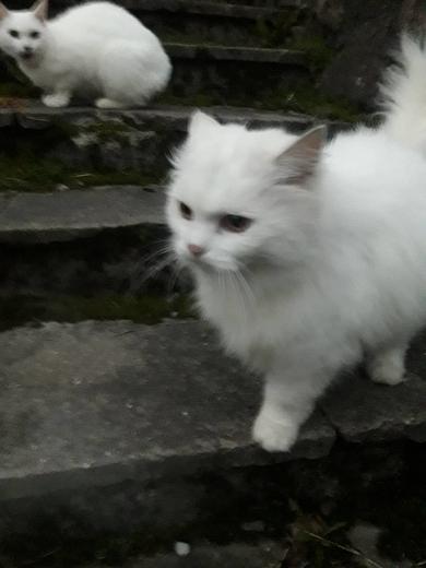 Замечены белые кот/кошка, фото 2