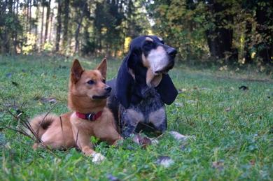 Потерялись охотничьи собаки
