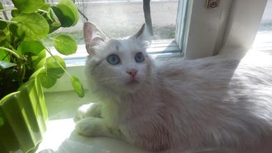 Потеряна кошка, фото 2