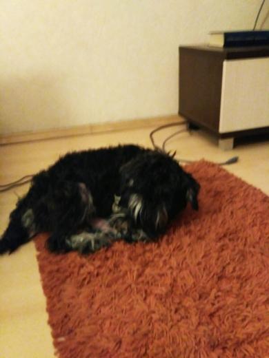 Нашли собаку , фото 3