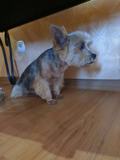 Найдена собака, фото 3