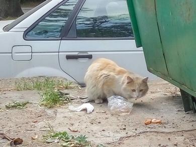 Замечен домашний кот/кошка, фото 2