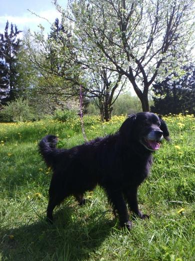 Пропал пёс возле оз.Большие Швакшты, фото 3
