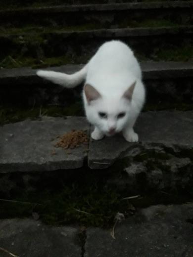 Замечены белые кот/кошка