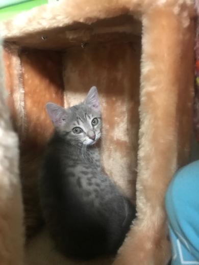 пропала кошка, фото 2
